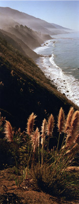 Big Sur with Pompas Grass by Phyllis Thompson