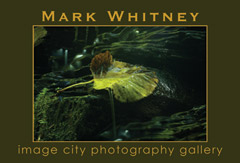 Mark Whitney Show Card