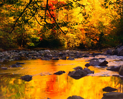 Gold on the Little River by Gary Thompson